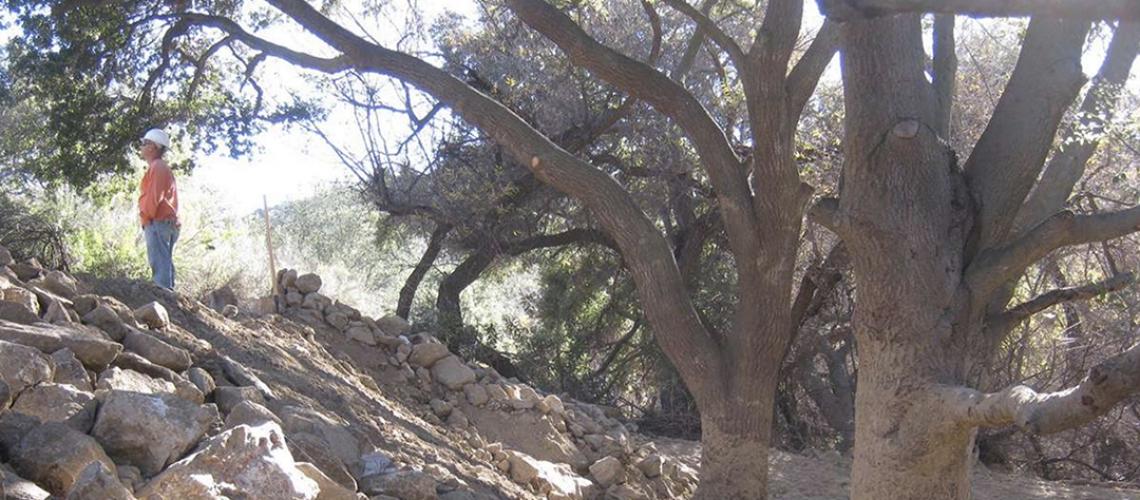 LA_Johnny_Southern_California_Construction_Arborist_Observation1