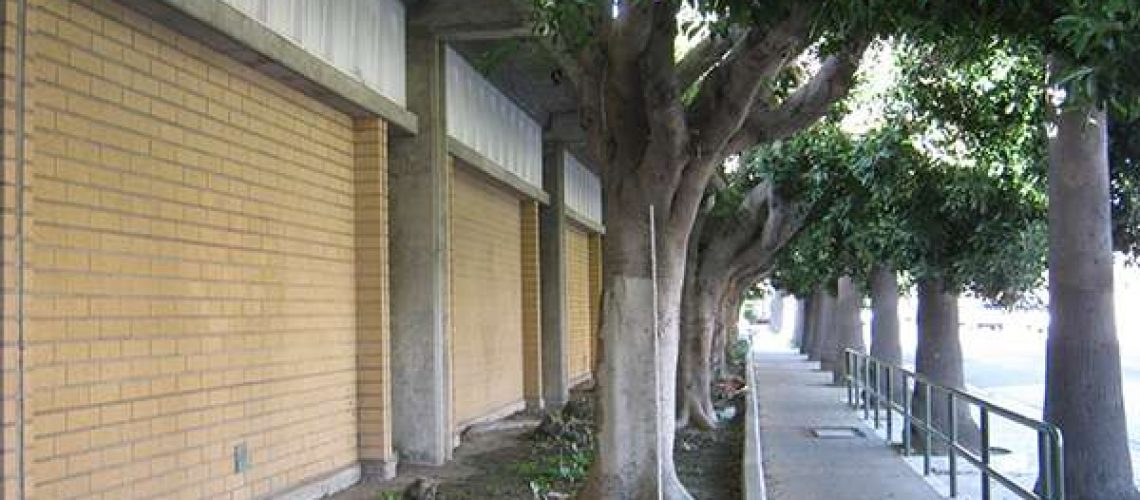 LA_Johnny_Southern_California_Tree_Selection3